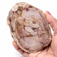 Förstenad fossil träskiva