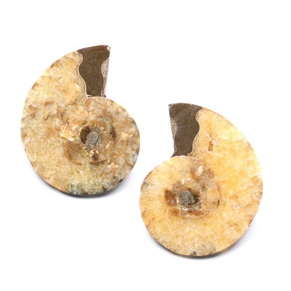 Dubbelsågat och polerat ammonitfossil