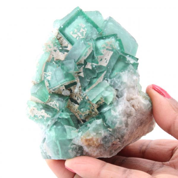 Kubiska kristaller av grön fluorit på massiv fluorit