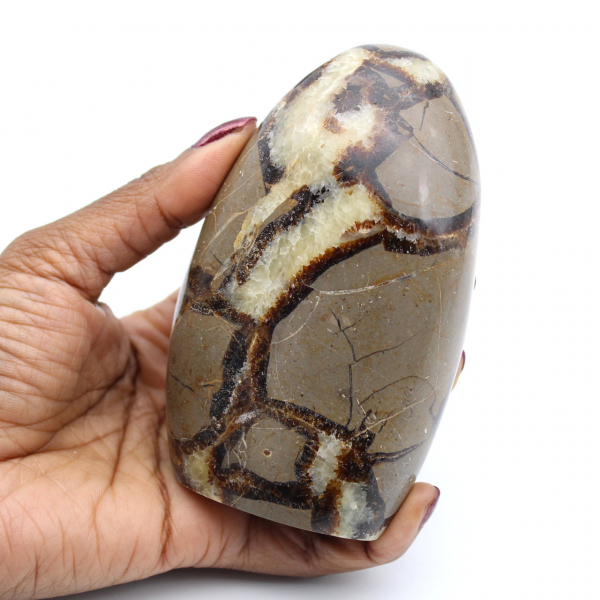 Polerad septaria rock