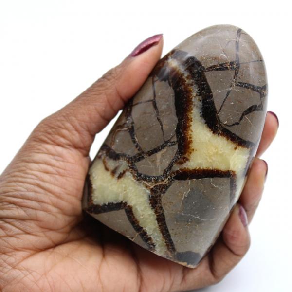 Septaria sten